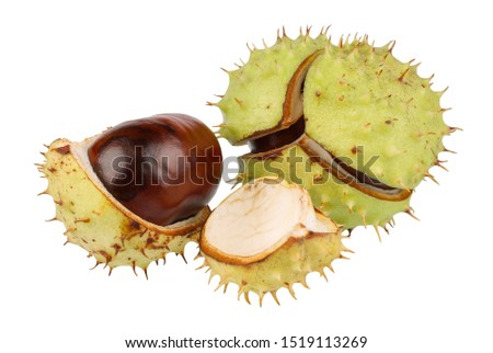 A group of ripe chestnuts in a bursted peel. Isolated picture.