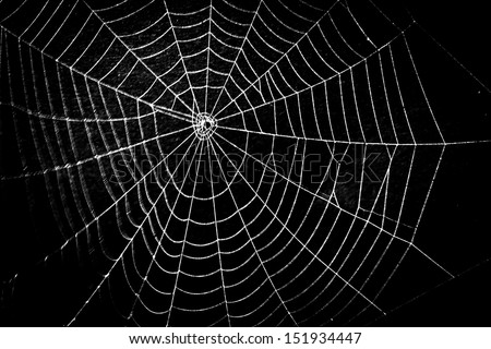 pretty scary frightening spider web for halloween
