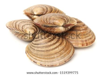 fresh clams on white background #1519399775