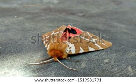 picture of a moth taken in a resort near Kel in neelum valley