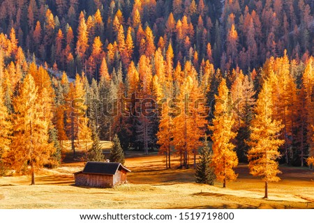 Seasonal autumnal scenery in highlands. Alpine landscape - wooden cabin circled by colorful yellow and red fall trees in Dolomite mountains, Southern Tyrol area. Popular travel destination in autumn.