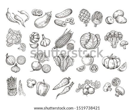 Sketch vegetables. Vintage hand drawn garden vegetable collection. Carrots broccoli potato salad mushroom farming set