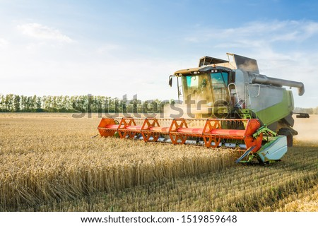 Combine harvester harvesting ripe golden wheat on the field. The image of the agricultural industry #1519859648