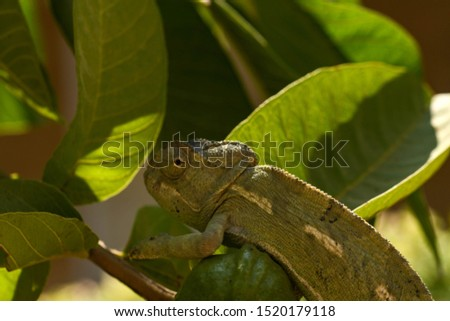 lizard or Lacertilia trying to disappear #1520179118