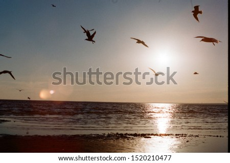 summer sunset and birds on the coast #1520210477