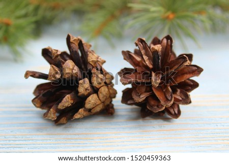 two fir cones on the background of fir branches #1520459363