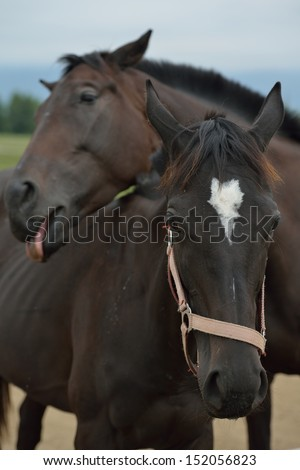 horse farm animal  group in the field #152056823
