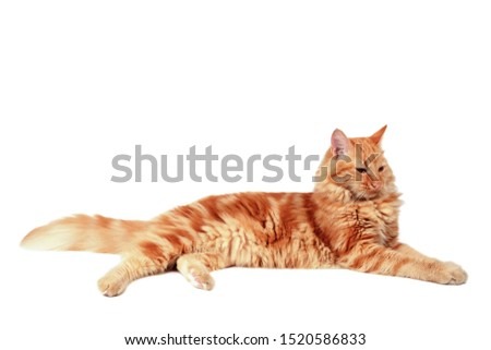 Ginger cat relaxing, isolated on white background #1520586833