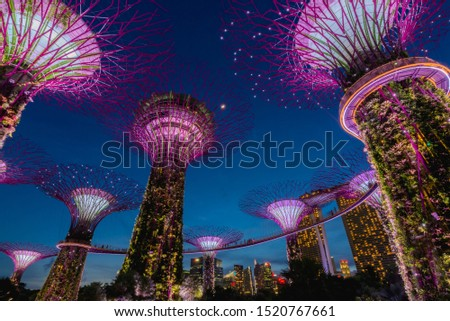 Singapore, Singapore - 23 August 2017: Supertrees illuminated for light show in gardens by the bay. #1520767661