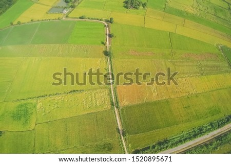 Aerial view or top view above patch way with green rice paddy fields plantation background, Lam Phayom village in Ban Pong, Ratchaburi, west Thailand. #1520895671