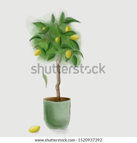 Lemon tree in a green pot #1520937392