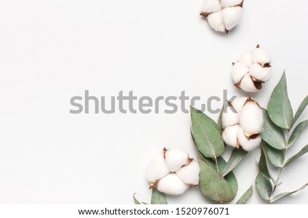 Flat lay flowers composition. Cotton flowers and fresh eucalyptus twigs on light gray background. Top view, copy space. Delicate white cotton flowers. Floral background, greeting card #1520976071