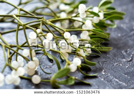 Mistletoe branch with green leaves and white berries on a gray textured background