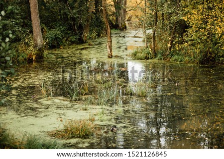 Summer landscape. swamp, marsh,quagmire, morass, backwater. An area of low-lying, uncultivated ground where water collects #1521126845