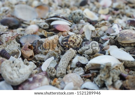Sea shell background. shell collection on beach. close up shells and coral.                           #1521289946