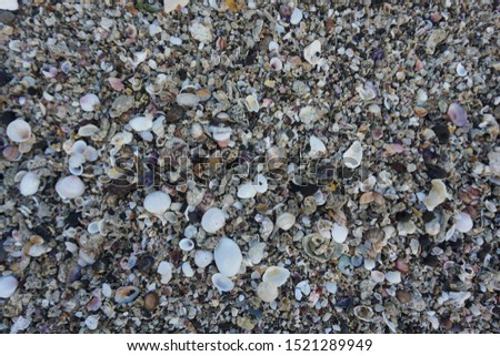 Sea shell background. shell collection on beach. close up shells and coral.                           #1521289949