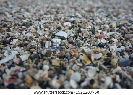Sea shell background. shell collection on beach. close up shells and coral.                           #1521289958