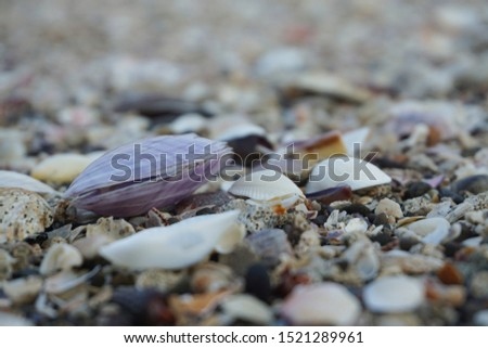 Sea shell background. shell collection on beach. close up shells and coral.                           #1521289961