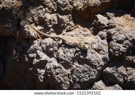 Lizard takes sun baths on the hill                              #1521392102