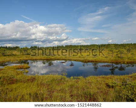 beautiful swamp lakes, swamp moss and grass, small swamp pines
