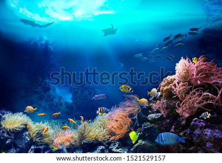 Underwater view of the coral reef. Ecosystem. Life in tropical waters. #1521529157