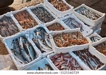 crates of fresh fish and crustaceans on the quay of the Adriatic sea fishing port 