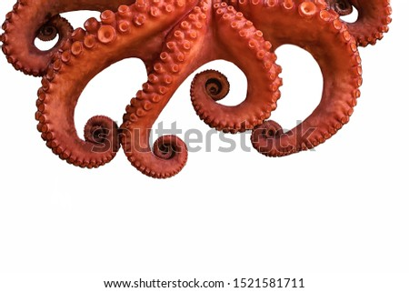 boiled big red octopus on a white background whole whole isolated #1521581711