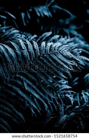 Dark blue background. Fern plant leaf background. Royal blue fern background. Tropical fern grass mood. Brake foliage. Bracken plant. Foliage wall decor. Botanical summer season garden. #1521658754