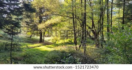 Warm autemn in the forest in town Skole. #1521723470