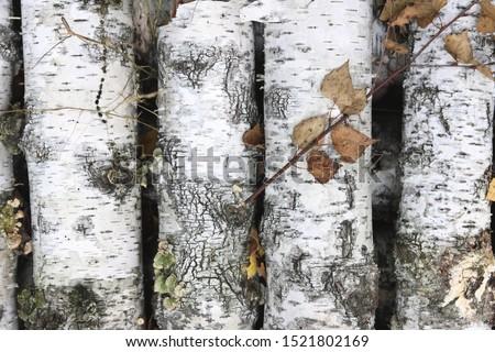 pattern of birch bark with black birch stripes on white birch bark and with wooden birch bark texture #1521802169