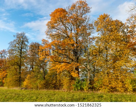 beautiful, gorgeous and colorful trees on an autumn day #1521862325