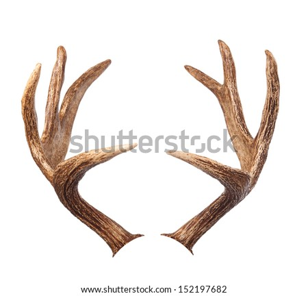 Elk antlers. Isolated on white Royalty-Free Stock Photo #152197682