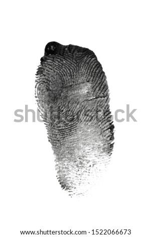 fingerprint pattern isolated on white #1522066673