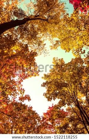 Seasonal travel, retro backdrop and rural environment concept - Beautiful autumn landscape background, vintage nature scene in fall season #1522118255