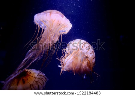 Jellyfish floating in the sea. I feel healing just by looking. Royalty-Free Stock Photo #1522184483