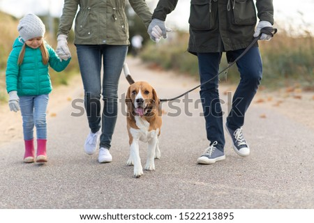 family, pets and people concept - mother, father and little daughter walking with beagle dog on leash in autumn #1522213895