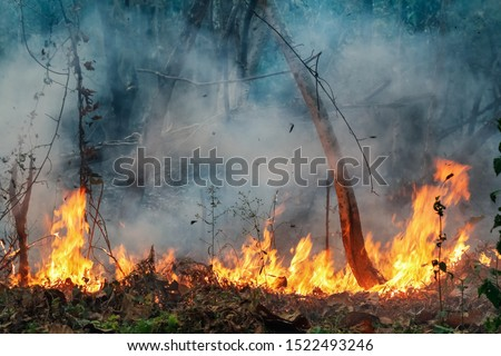 Amazon rain forest fire disaster is burning at a rate scientists have never seen before. Royalty-Free Stock Photo #1522493246