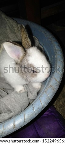 cute and cute little bunny animals #1522496561