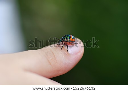 Child hand finger with lady bug crawling on it. #1522676132
