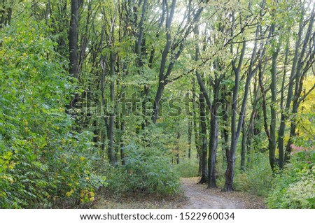 October. Autumn colors. Trees with yellowed leaves. The morning sun, breaking through the foliage, brightens the foliage. #1522960034