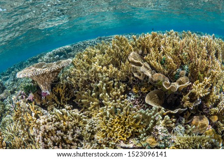 Healthy hard corals in clear water #1523096141