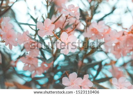 Beautiful pink flower bush, Soft focus on the bushes, Close-up, Copy-space #1523110406