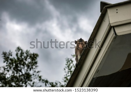 The monkey sat on the roof and was looking out from the picture.