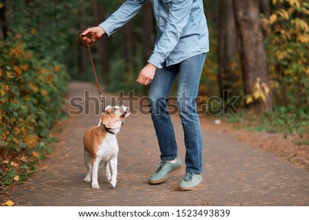 man giving food to his pet, feeding dog outdoors, close up cropped photo. hobby, interest #1523493839