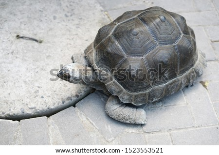 """Tortoise """"Testudinidae"""" from above point of view #1523553521"""