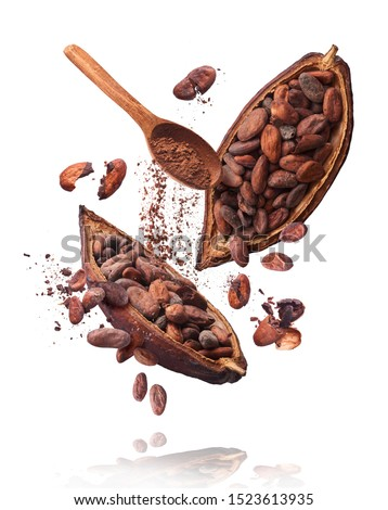 Cocoa pod flying in the air. Cracked cocoa pod and beans and wooden spoon with cocoa powder levitate on white background. High resolution image. Levitation concept. #1523613935