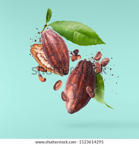 Cocoa pod fling in the air. Cracked and whole cocoa pod and beans levitate on turquoise background. High resolution image. Levitation concept. Royalty-Free Stock Photo #1523614295