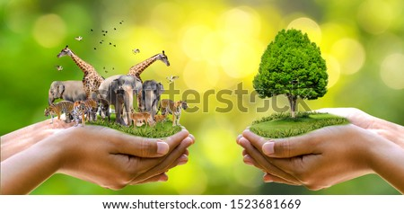 Concept Nature reserve conserve Wildlife reserve tiger Deer Global warming Food Loaf Ecology Human hands protecting the wild and wild animals tigers deer, trees in the hands green background Sun light #1523681669