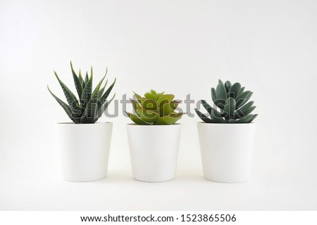 Close up of cactus in the white pot with white background #1523865506