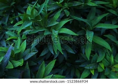 tropical leaves leaf background abstrack green  #1523866934